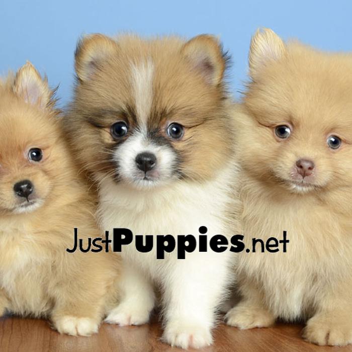 Mix Puppies For Sale Orlando Fl